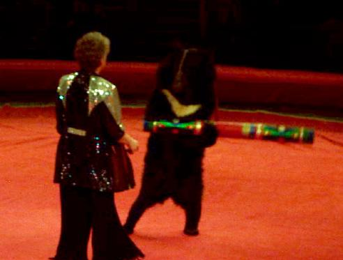 Moscow Russia Circus Performing Bears
