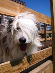 Kathy's dog Bode; Kathy's hiding...