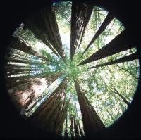 Henry Cowell Hike, Jul 1 2001
